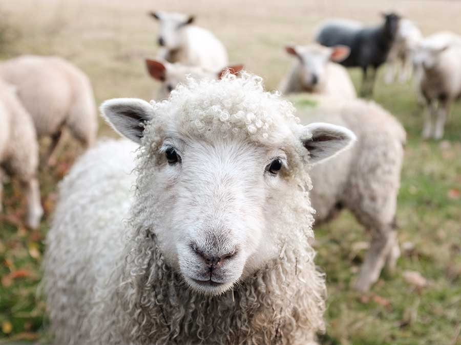 organic wool clothing, why use organic wool